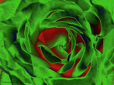 Digital Art - A Complimentary Rose by Kimmary MacLean