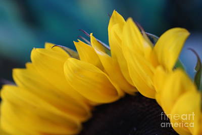 Photograph - A Cool Sunflower by Sandra Day