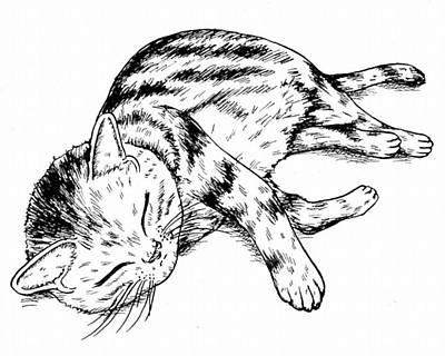 Ink Drawing - A Copy Of A Cat by Hisashi Saruta
