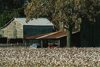 A Cotton Field Surrounds A Small Farm Art Print by Medford Taylor