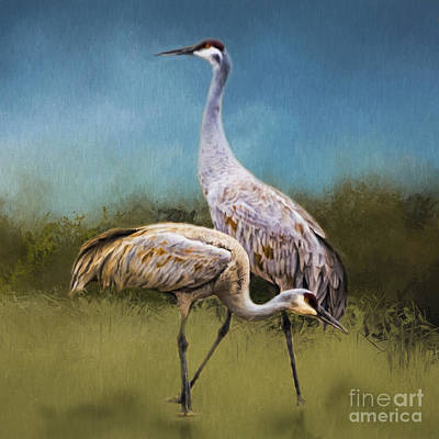 Photograph - A Couple Of Cranes by Janice Rae Pariza