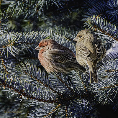 Photograph - A Couple Of House Finch by LeeAnn McLaneGoetz McLaneGoetzStudioLLCcom