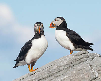Photograph - A Couple Of Puffins by Paul Treseler