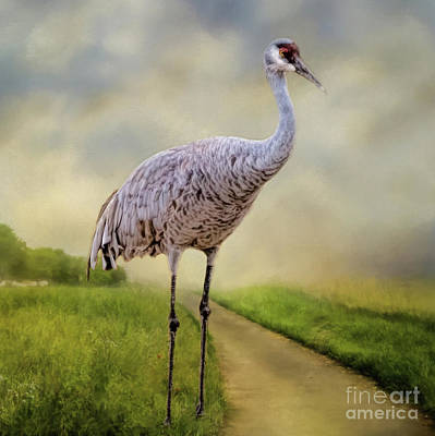 Photograph - A Crane In The Lane by Janice Rae Pariza
