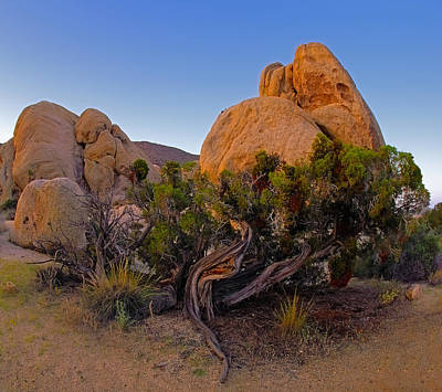 Photograph - A Crazy Juniper by Paul Breitkreuz