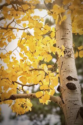 Photograph - A Crisp Fall Morning  by Saija Lehtonen