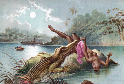 Native Drawing - A Crocodile Attacking A Native Woman In by Vintage Design Pics