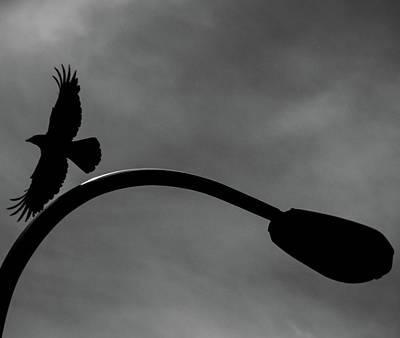 A Crow And A Streetlight Art Print