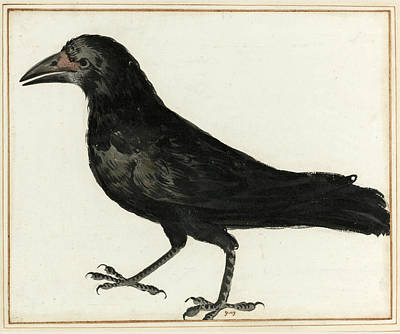 Drawing - A Crow  by Italian School