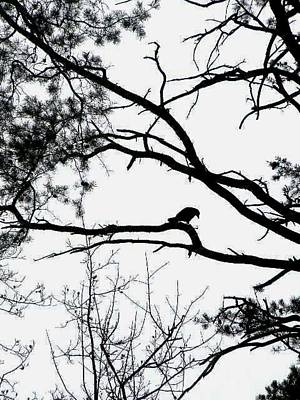 Photograph - A Crow Shook Down On Me The Dust Of Snow by Fareeha Khawaja