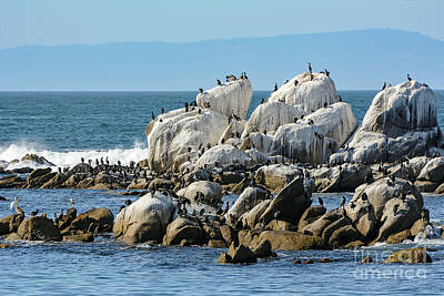 Photograph - A Crowded Bird Rock by Susan Wiedmann