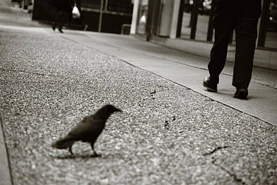 Photograph - A Crows Walk  by The Artist Project