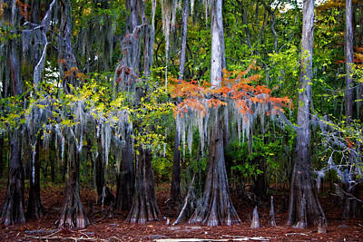 Lily Digital Art - A Cypress Fall by Lana Trussell
