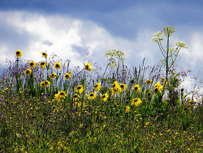 Photograph - A Daisy Day by Karen Shackles