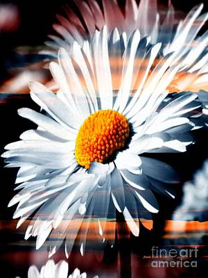 Photograph - A Daisy In A Sunset by Annie Zeno