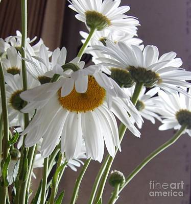 Photograph - A Daisy Will Sweeten A Room by L Cecka