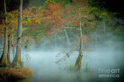 Art Print featuring the photograph A Dancing Cypress by Iris Greenwell