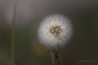Photograph - A Dandelion by Lora Lee Chapman