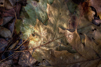 Photograph - A Dapple Of Sun by Steve Gravano