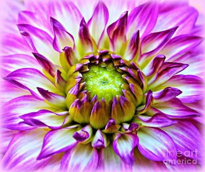 Bitsy Photograph - A Dashing Dahlia by Clare Bevan
