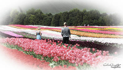 Photograph - A Day Amongst The Tulips by Chris Armytage