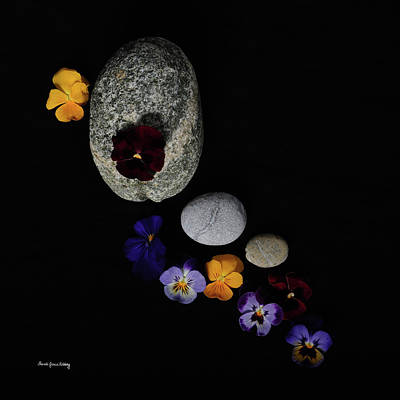 Photograph - A Day For Pansies by Randi Grace Nilsberg
