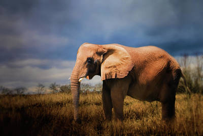 Photograph - A Day In Nature Elephant Art by Jai Johnson