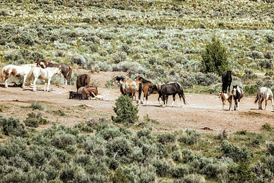 Photograph - A Day In The Lives Of South Steens Wild Horses, No. 2 by Belinda Greb