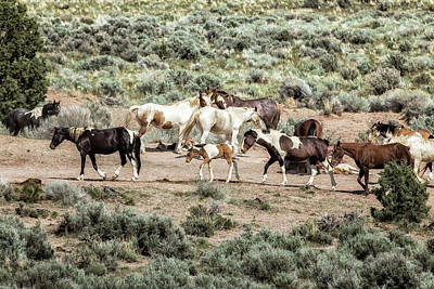 Photograph - A Day In The Lives Of South Steens Wild Horses, No. 3 by Belinda Greb