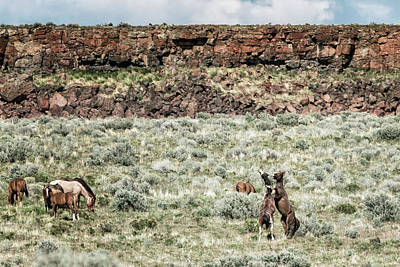 Photograph - A Day In The Lives Of South Steens Wild Horses, No. 8 by Belinda Greb