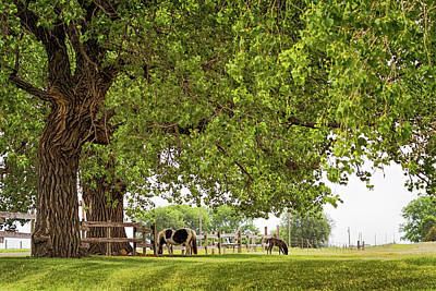 Photograph - A Day In The Shade by Susan Rissi Tregoning