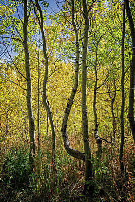 Photograph - A Day In The Woods by Scott Read