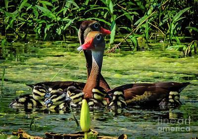 Animal Portraits - A Day of Ducks by JB Thomas