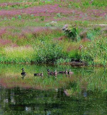 Photograph -  A Day On The Pond by Sean Sarsfield