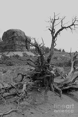 Photograph - A Dead Tree Sculptured By The Desert by Christiane Schulze Art And Photography