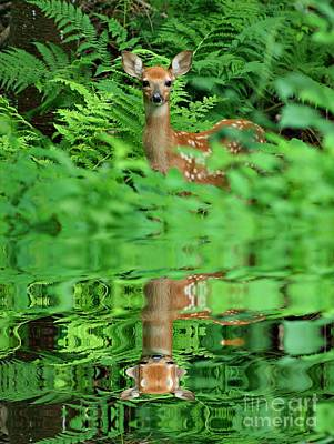 Photograph - A Deer Reflection by Barbara S Nickerson