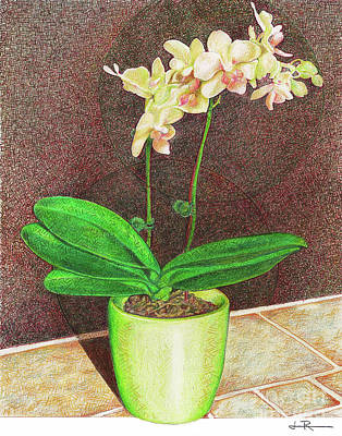 Orchid Drawing - A Delicate Phal by Jim Rehlin
