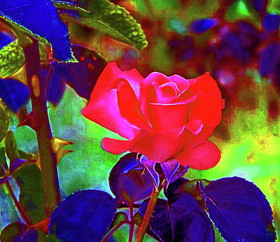 Digital Art - A Delta Rose 2018 by Joseph Coulombe