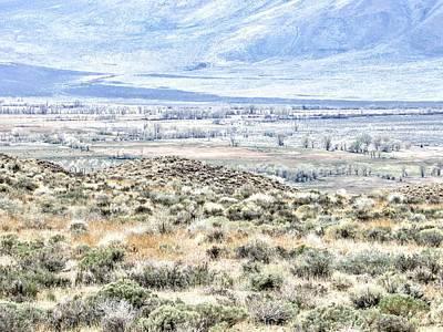 Photograph - A Desert Spring by Marilyn Diaz