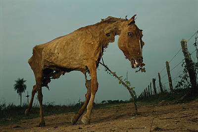 Carcass Photograph - A Desiccated Horse Carcass Propped by Joel Sartore
