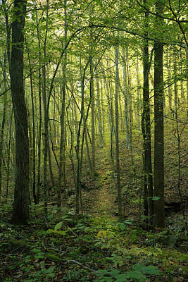 Photograph - A Different Path Led Through The Woods by Douglas Barnett