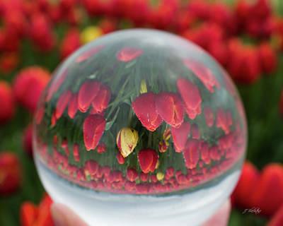 Photograph - A Different Perspective - Flower Art by Jordan Blackstone