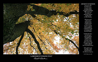 Photograph - A Different Perspective W Poem by David Dunham