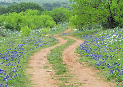 Photograph - A Dirt Road Lined By Blue Bonnets Of Texas by Usha Peddamatham