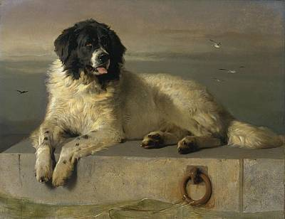 Painting - A Distinguished Member Of The Humane Society by Edwin Henry Landseer