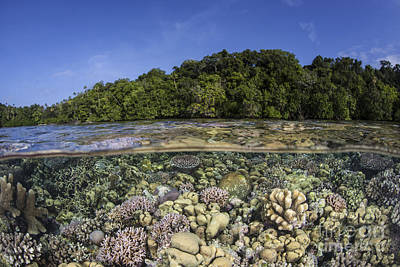 Olympic Sports - A Diverse Coral Reef Grows In Shallow by Ethan Daniels