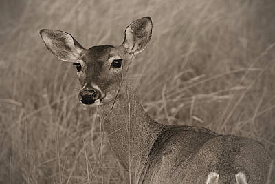 Photograph - A Doe A Deer by Nadalyn Larsen