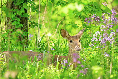 Photograph - A Doe  In The Flowers by Joni Eskridge