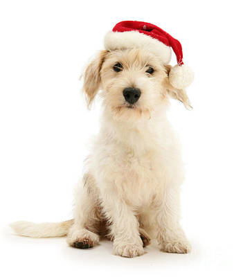 Photograph - A Dog Is Not Just Of Christmas by Warren Photographic