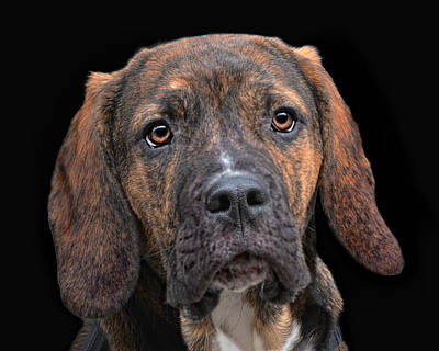 a dog named Lucifer Art Print